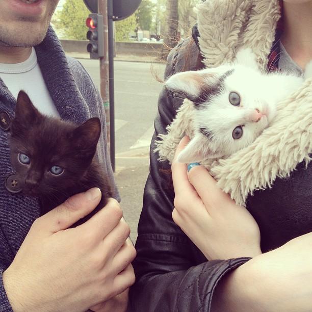 adolescent avec chauve chattefaire sa chatte gicler